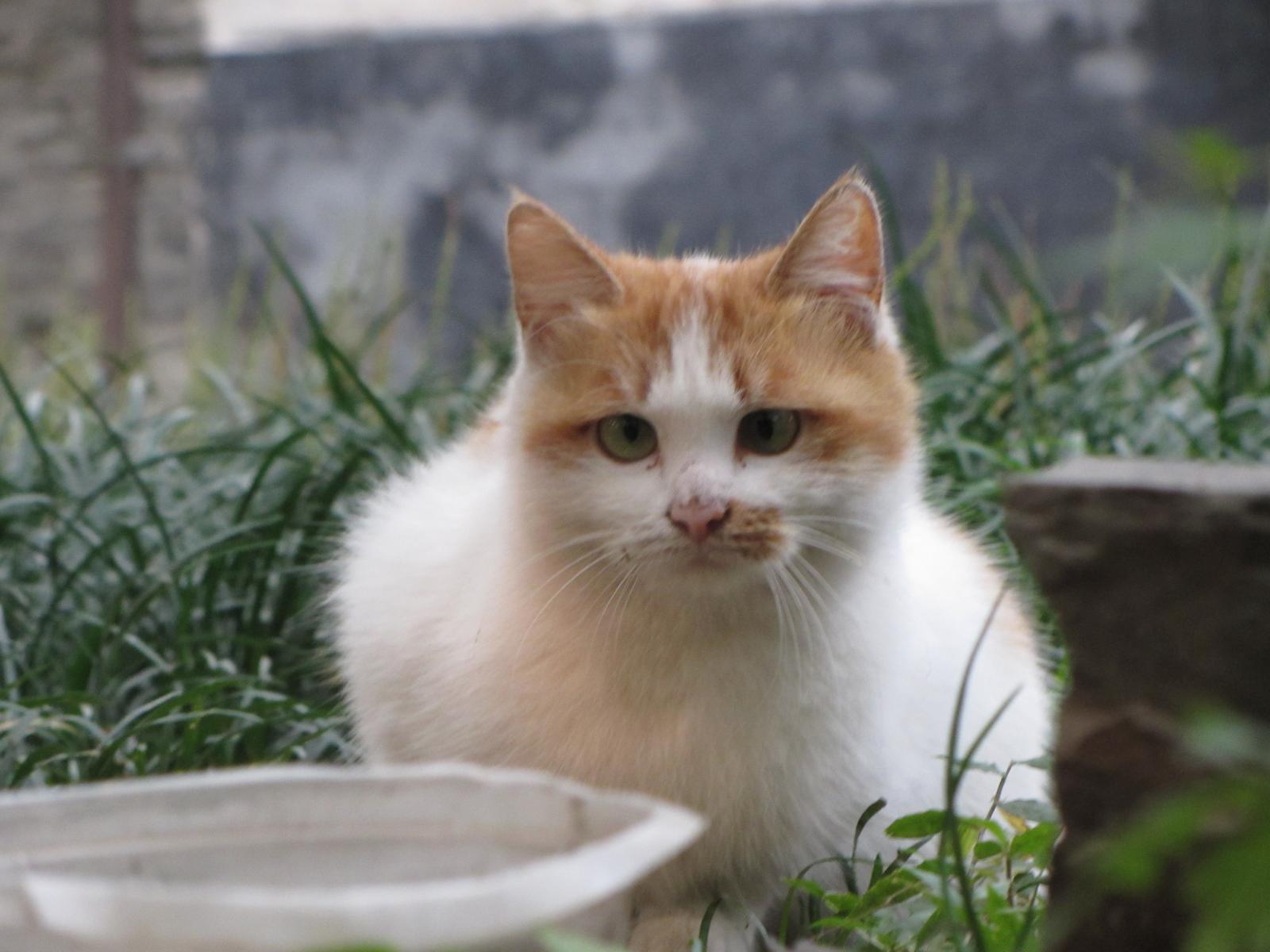 un chat bigleux